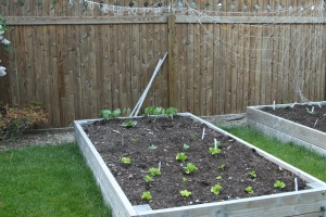 8 Life Lessons From Gardening