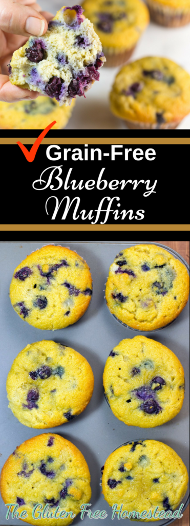 Moist & delicious blueberry muffins | Easy healthy grain-free recipe | No sugar recipe | Coconut flour recipe | paleo recipe | gluten free recipe